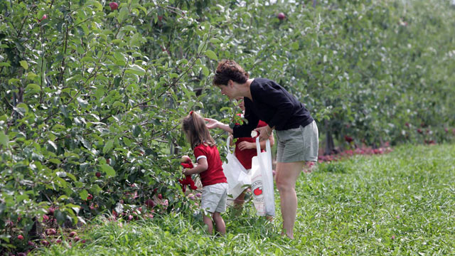 PHOTO: Moms and kids picking apples.