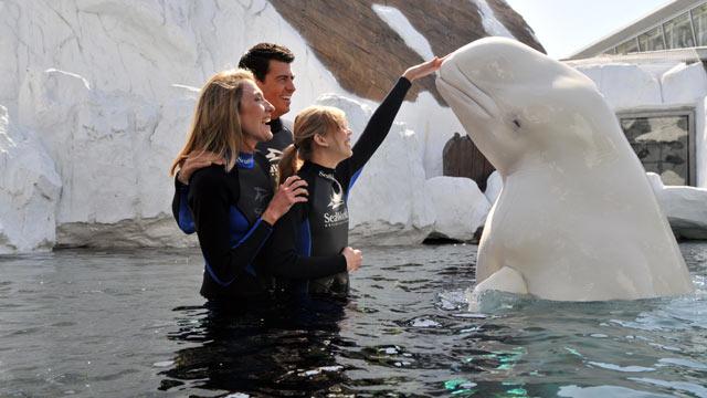 PHOTO: Beluga Interaction Program, SeaWorld