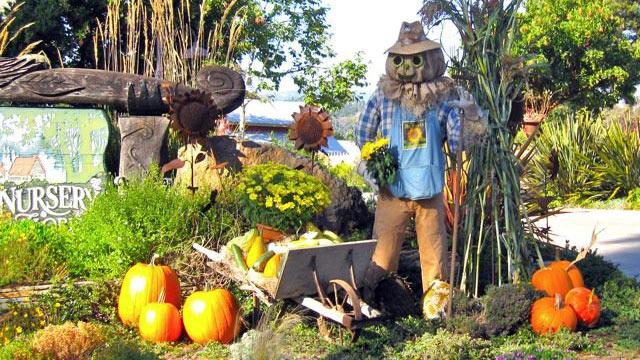 PHOTO: Cambria Scarecrow Festival in Cambria, Calif.