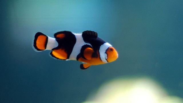 PHOTO: Look for Nemo