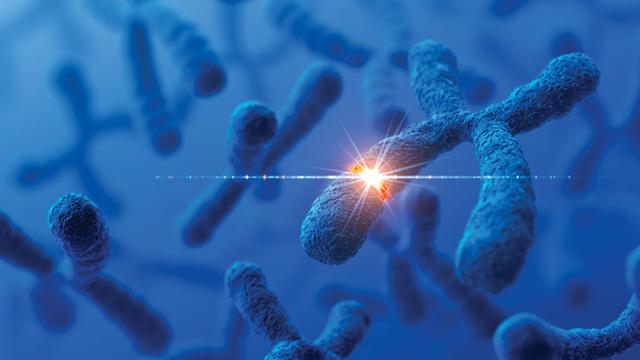 PHOTO: Telomeres