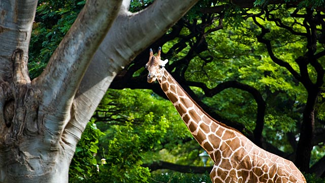 PHOTO:Honolu Zoo