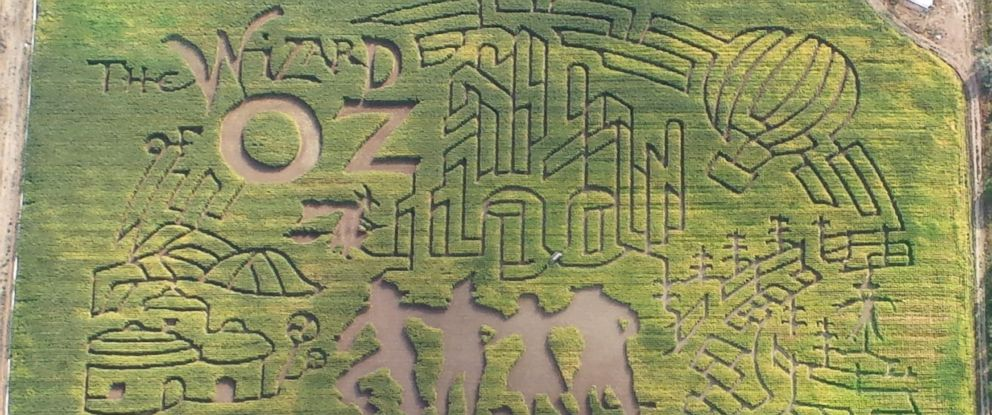 PHOTO: This 20-acre corn maze is Wizard of Oz themed and the 18th for this Idaho attraction, The Farmstead.