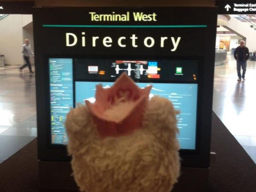PHOTO: On one of the concourses at Denver International Airport, Princess Kitty looked at a map.