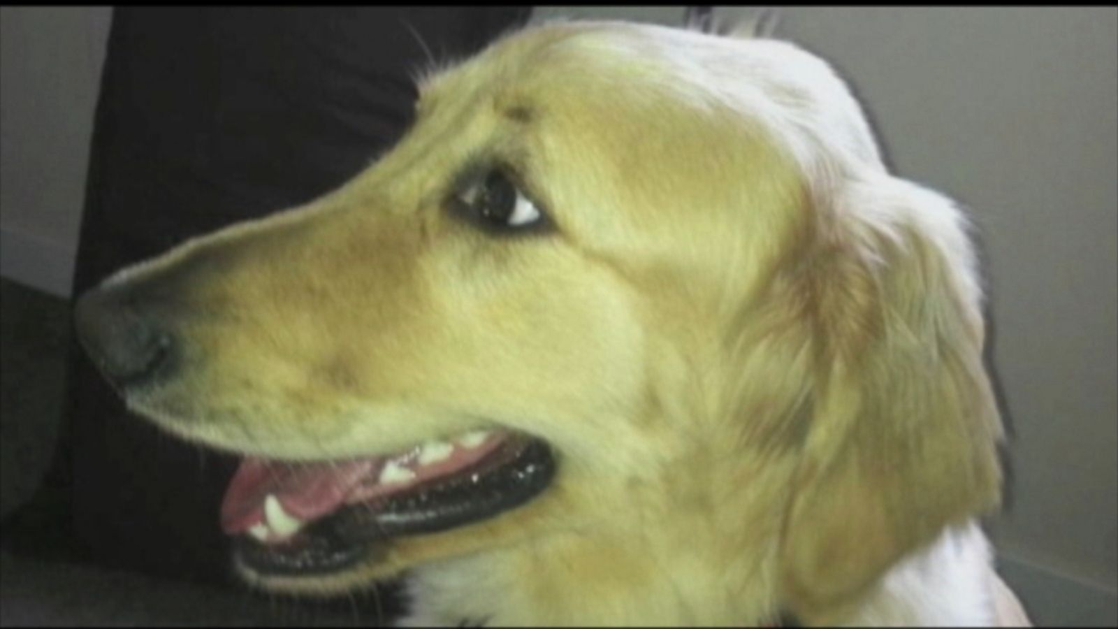 Dog dies after being left in petco dryer owner says abc news solutioingenieria Images