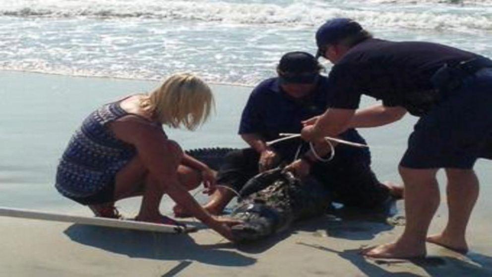 7-Foot Alligator Washes Ashore on South Carolina Beach