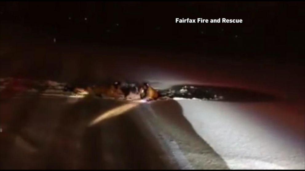 Saint Bernard Rescued After Falling Into Frozen Lake