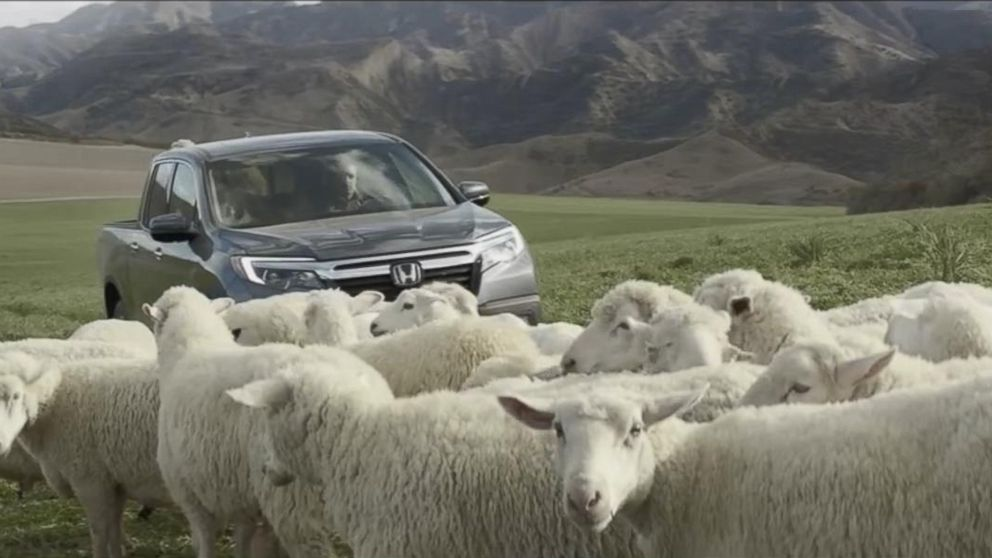 VIDEO: The car company's commercial for the 2017 Ridgeline stars a flock of sheep singing a Queen classic.