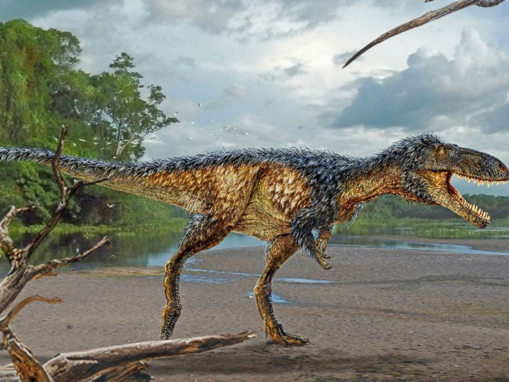 VIDEO: New Tyrannosaur Species Announced