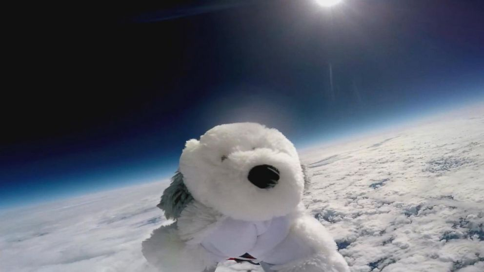 Black Cat Stuffed Animal, Stuffed Animal Makes Epic Journey To The Edge Of Space In Amazing Video Abc News