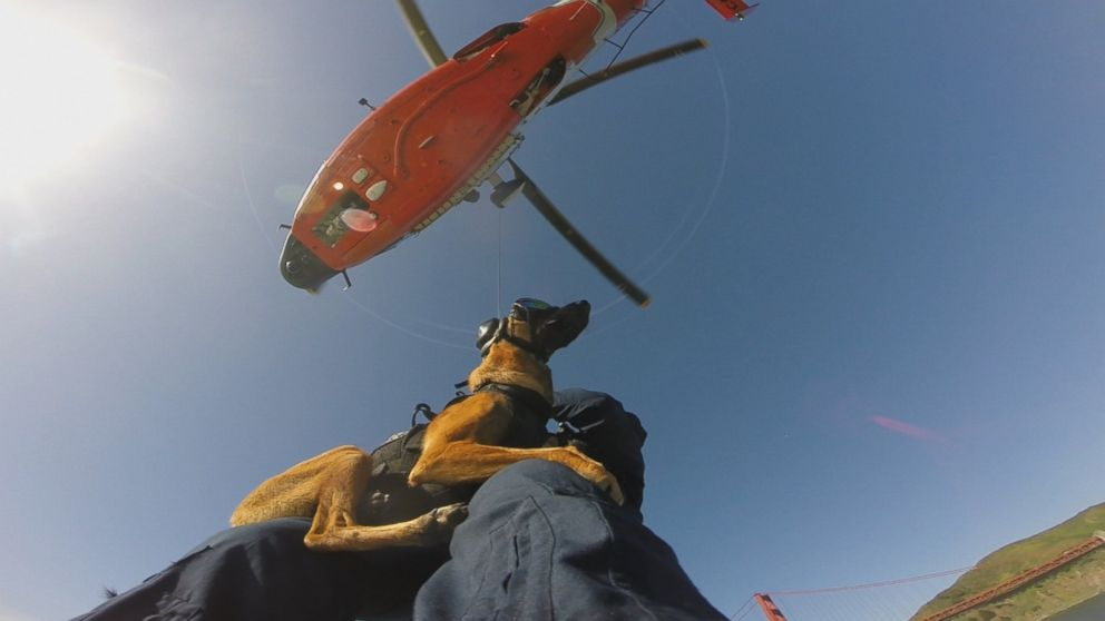 Canine Coasties: Meet the Coast Guard Dogs That Just Finished Helicopter Training