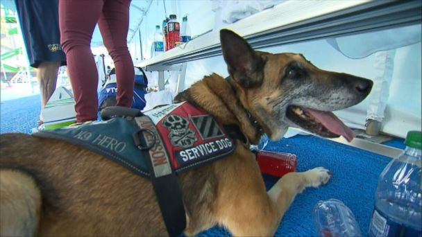 Service Dogs Help Wounded Warriors Win Gold at Invictus Games