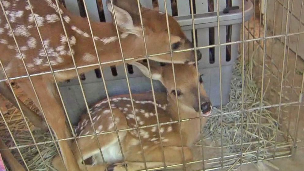 'Fawn-Napping' Is Becoming an Increasing Problem in Virginia, Experts Say