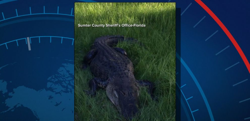 VIDEO: An alligator attacked a man in Florida Tuesday evening -- about an hour away from where a boy was killed by a gator outside a Disney resort, according to the local sheriffs office.