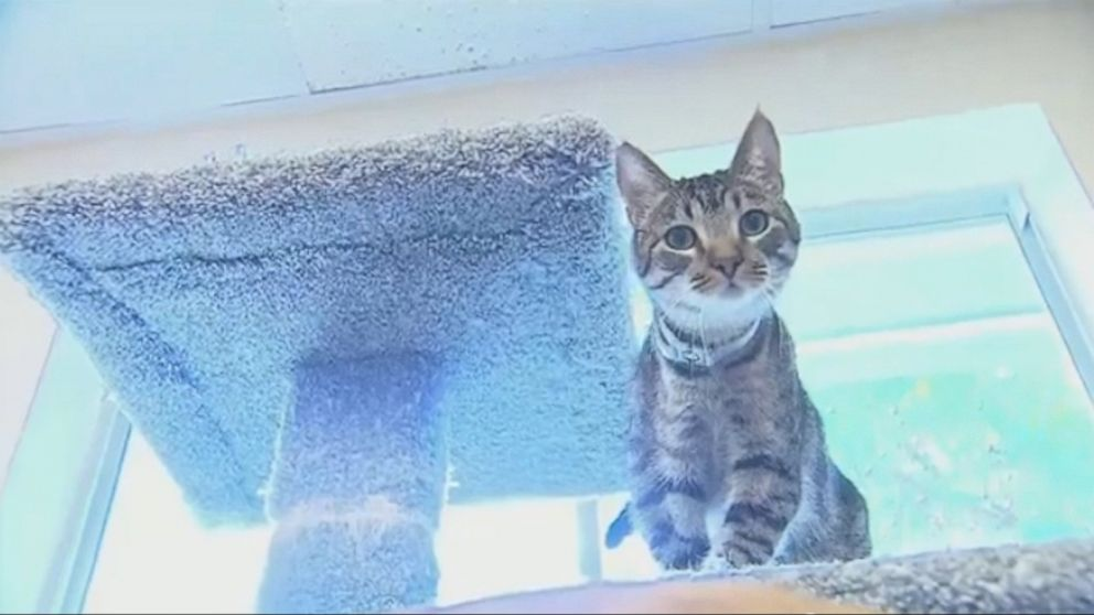 Faucet-Turning Felines Suspected in Flooding Cat-astrophe Video ...