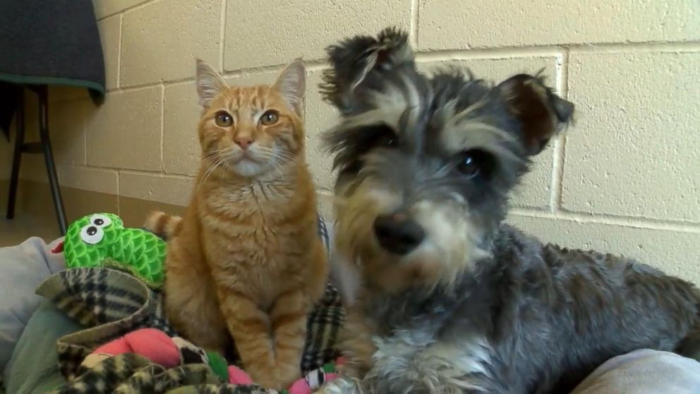 Meet Romeo the Cat and Juliet the Dog, Star-Crossed Lovers at a California Animal Shelter