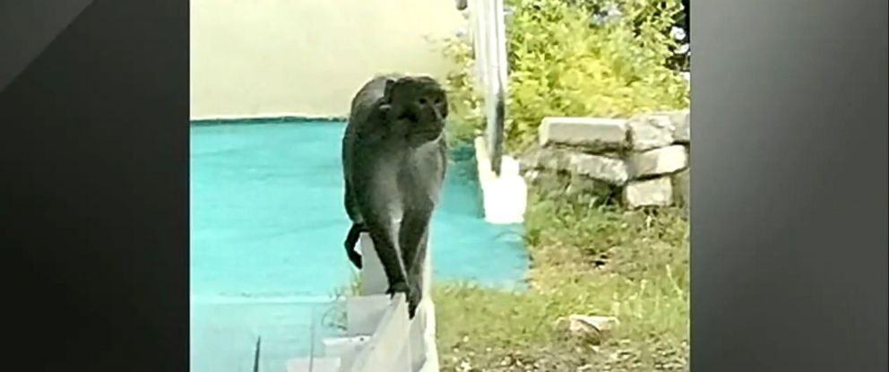 VIDEO: Officials are warning residents against approaching the wild animal or making eye contact.
