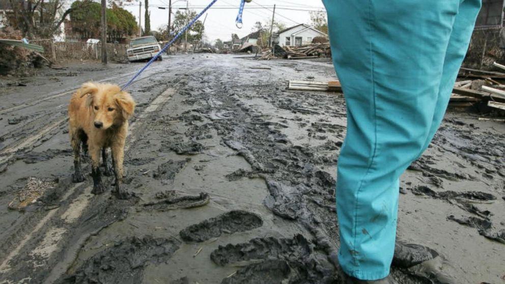 South Carolina residents take in needy animals ahead of