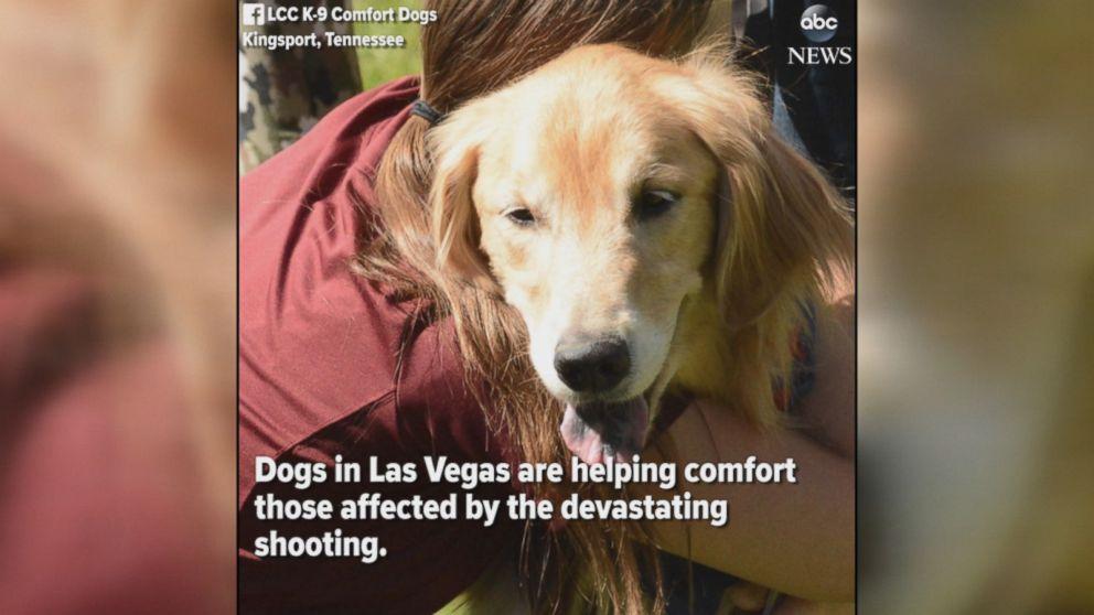 Dogs comfort Las Vegas shooting survivors