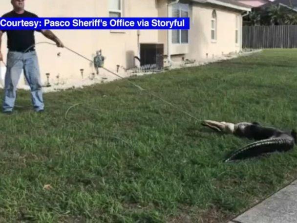 WATCH:  Homeowner finds gator under his pickup truck