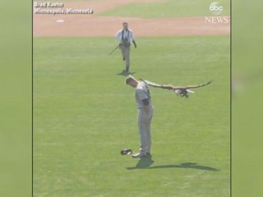WATCH: The eagle has landed ... on the Mariners' pitcher