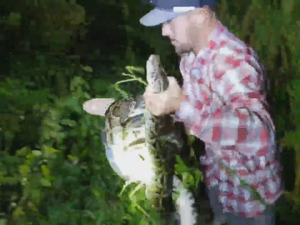 WATCH:  Man saves alligator from python's deadly wrap