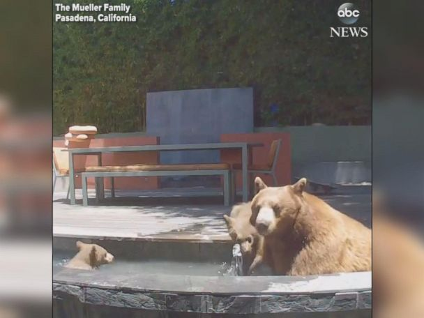 WATCH:  Bears cool off in fountain