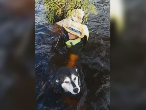 WATCH:  Stranded boater, dogs rescued by sheriff's deputies