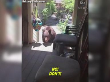 WATCH:  Woman orders bear to get off her porch