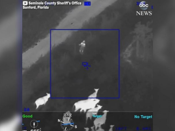 WATCH:  Cows assist police in arresting car theft suspect