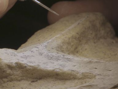 WATCH Rare Pterosaur fossil discovered in Utah