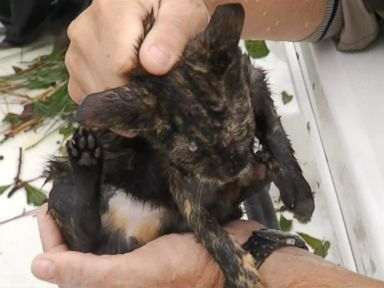 WATCH: Cats rescued from NC floodwaters