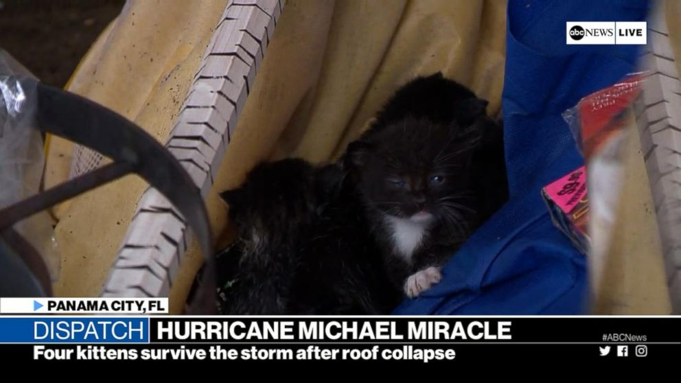 VIDEO: Four kittens survive roof collapse during Hurricane