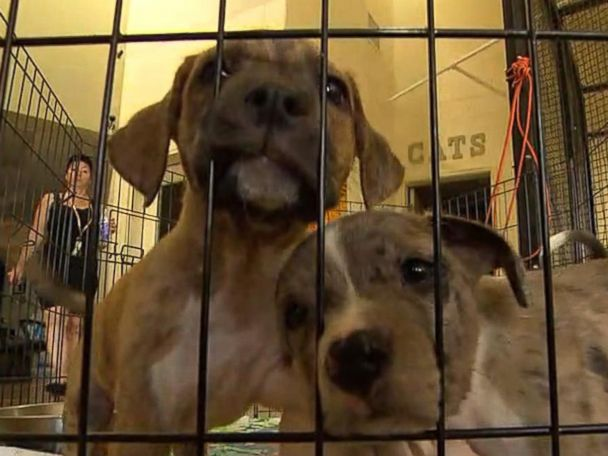 WATCH:  Animals trapped in shelter after Hurricane Michael