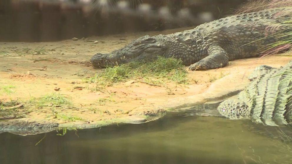 Florida man jumps into crocodile pit, suffers bite, escapes