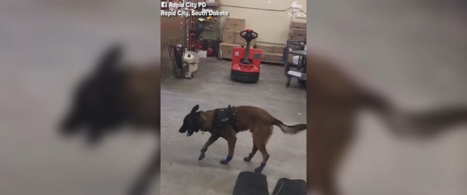 VIDEO: K-9 gets new cold weather gear