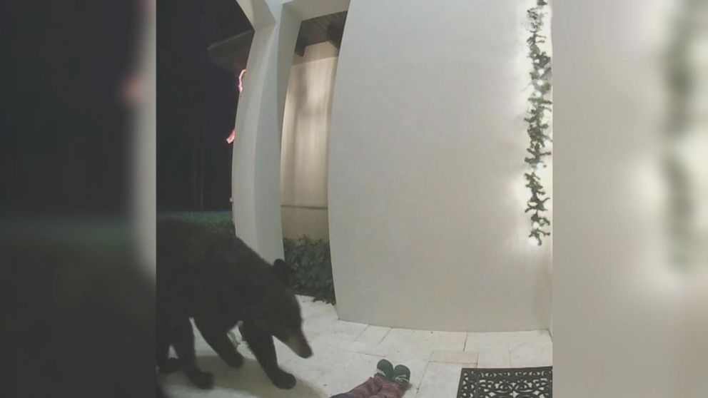 VIDEO: Florida bear rings doorbell
