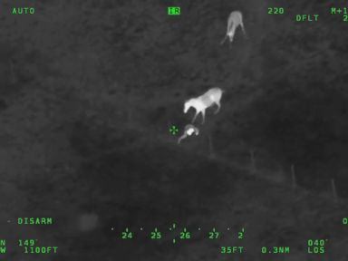 Video Deputies saddle fleeing suspect with the help of horse trio in hot pursuit