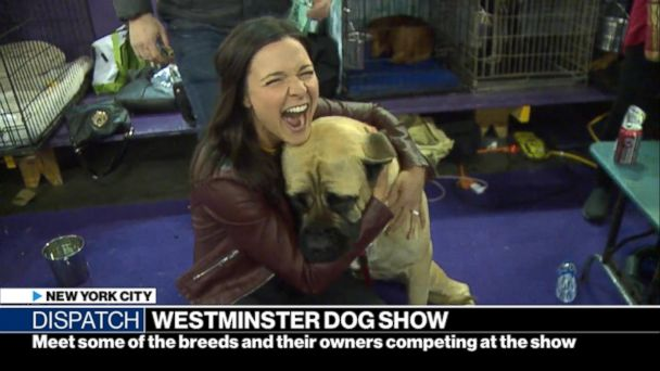 Meet some of the breeds and their owners competing at the 143rd Westminster dog show
