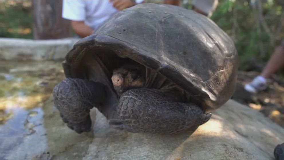 Tortoise thought to be extinct discovered in Galapagos Islands