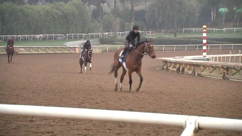 20th horse in 2 months dies at Santa Anita racetrack in
