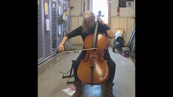 Cellist plays for dogs at animal shelter
