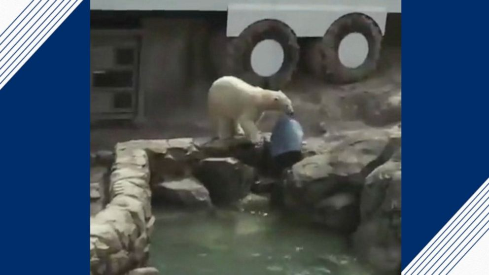 Polar bears have fun with trash can at zoo