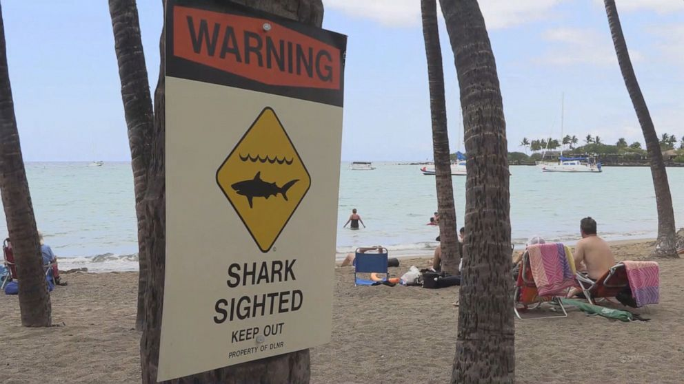 Woman survives shark bite in Hawaii while kayaking with husband