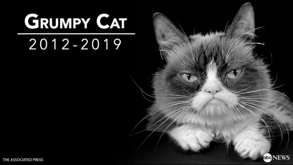 The life and legacy of 'Grumpy Cat'