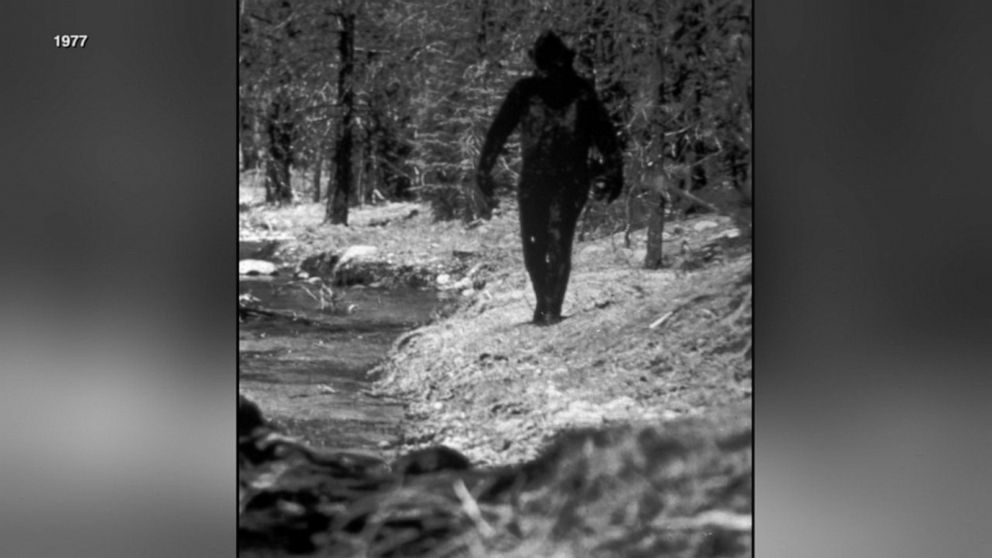 1970s Bigfoot investigation