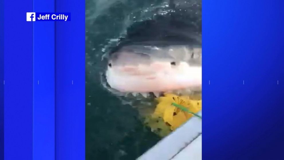 Great white shark spotted in New Jersey