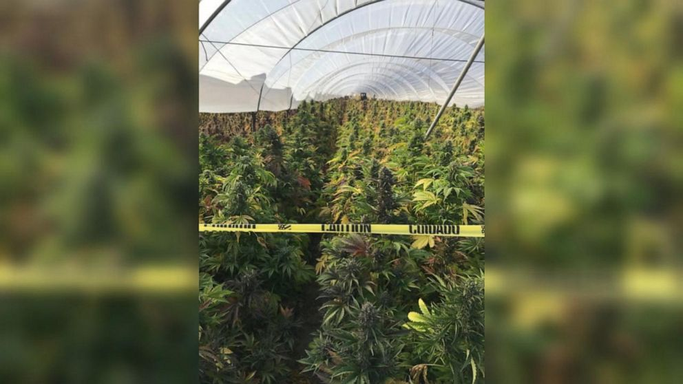 20 tons of cannabis seized in Santa Barbara bust