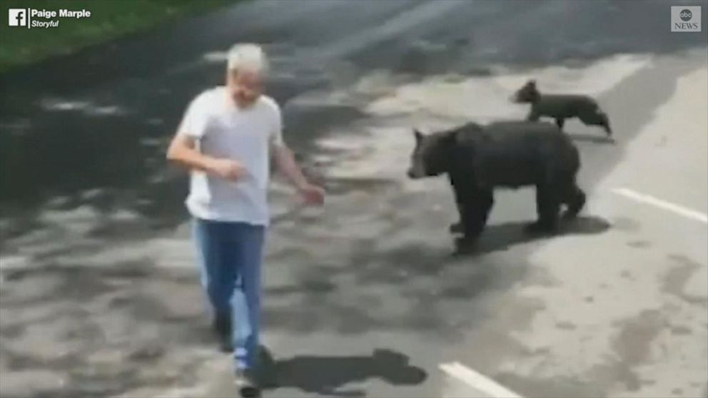 VIDEO: Mother bear scares off man who gets too close to cubs