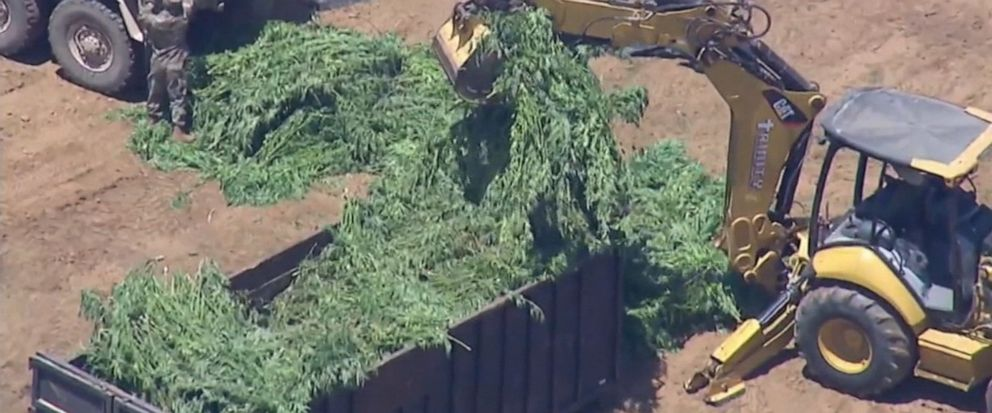Authorities in Southern California have conducted a massive drug bust that includes 14.9 tons of illegally-grown marijuana in one area.
